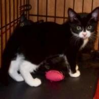Dominion Street Kittens