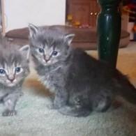 Kitten Season Again