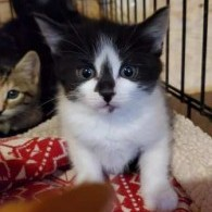 Kittens of NWAS