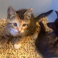 Kittens, kittens and more kittens