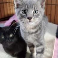 Kittens - Oct 2020