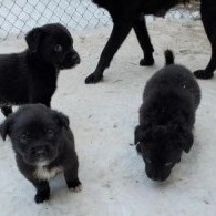 PHONETIC PUPS - WE ARE NO LONGER ACCEPTING APPLICATIONS **